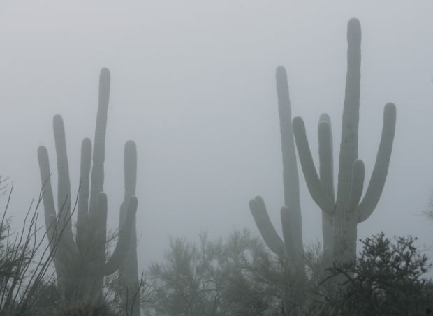 Full effect of Jan. deep freeze on saguaros, others unknown