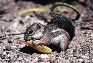 Critters of Southern Arizona | Science | tucson com