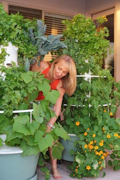 Aeroponics: No soil required for beautiful, bountiful garden