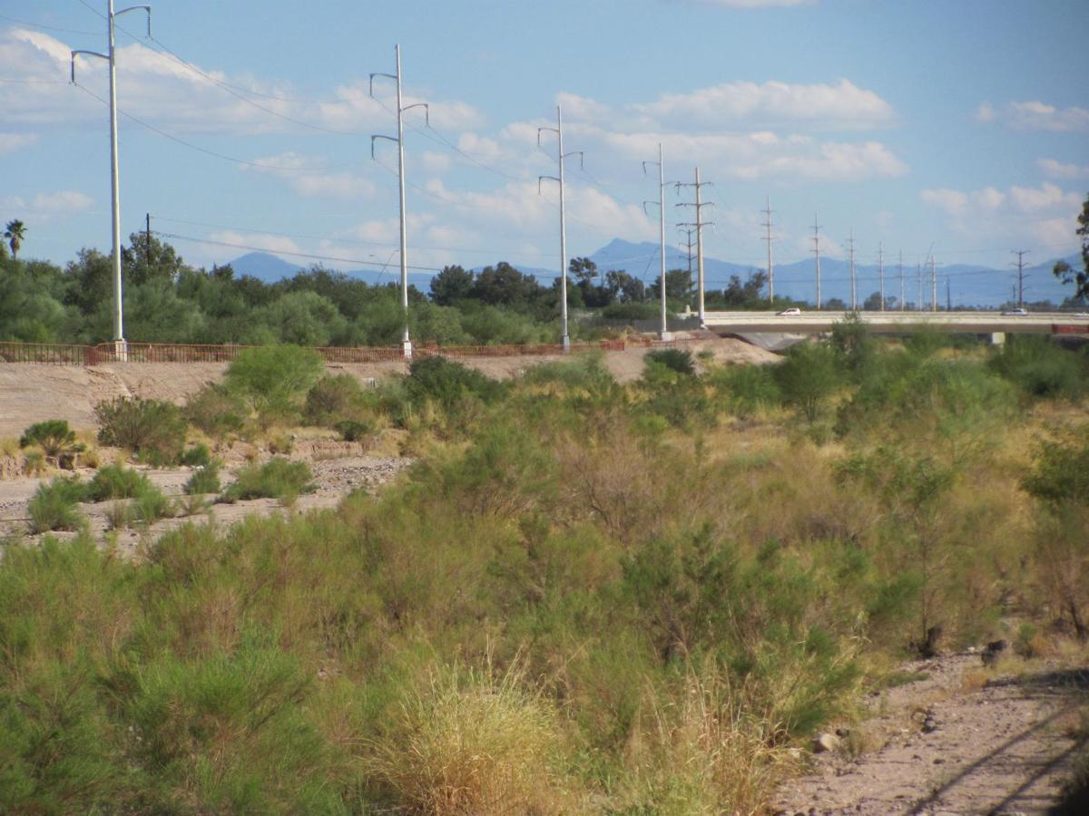 Vegetation in Pantano Wash