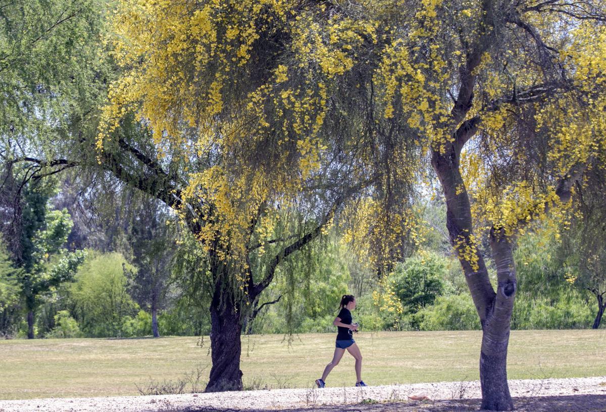Tucson trees