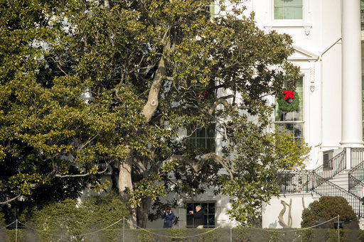 Historic White House Magnolia Cut Back For Safety Reasons Ap