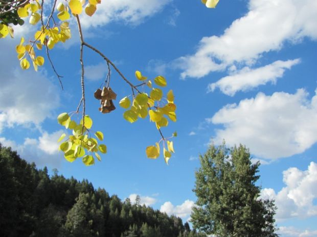 First hints of autumn color in Catalina Mountains