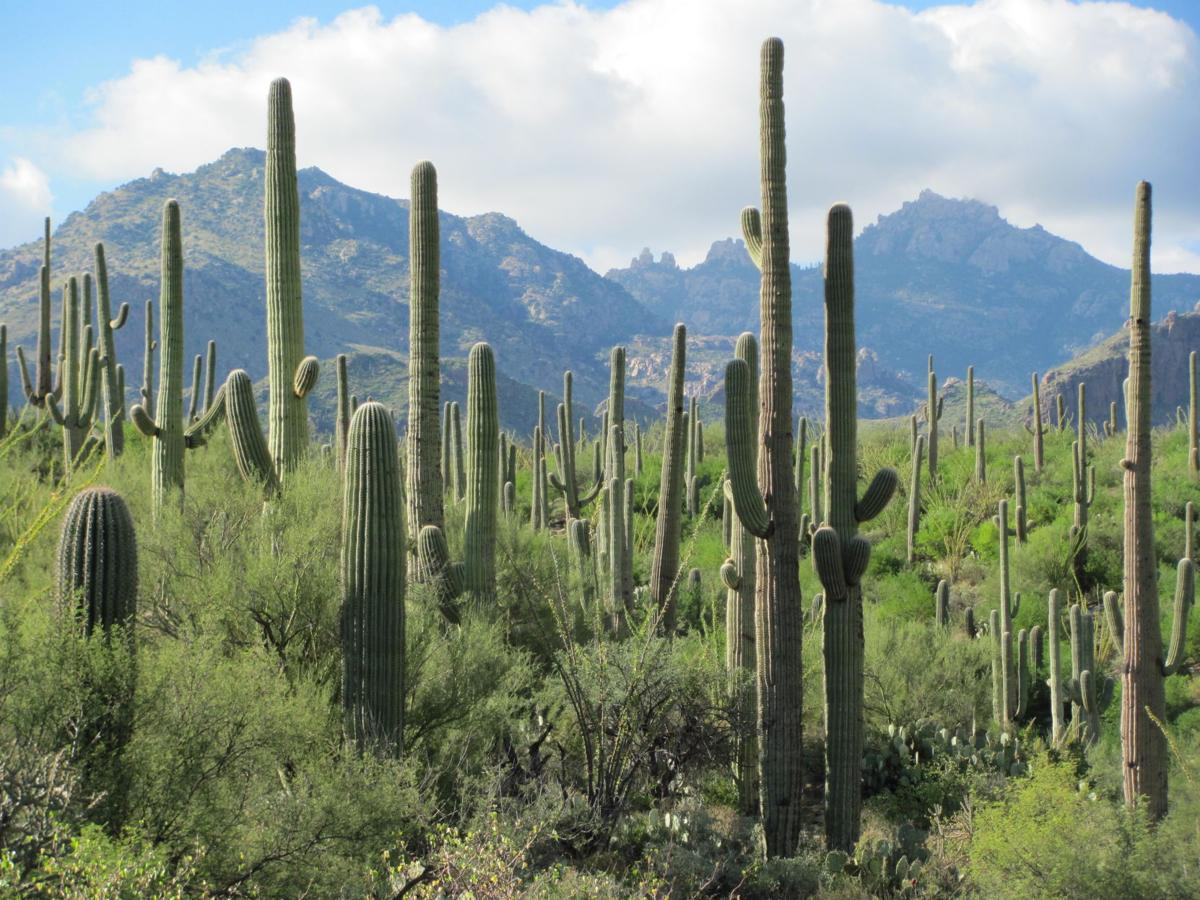 Sabino Canyon Recreation Area, Tucson (copy)