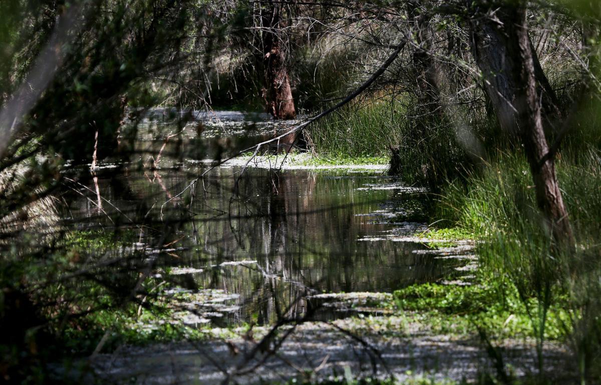 Las Cienegas National Conservation Area
