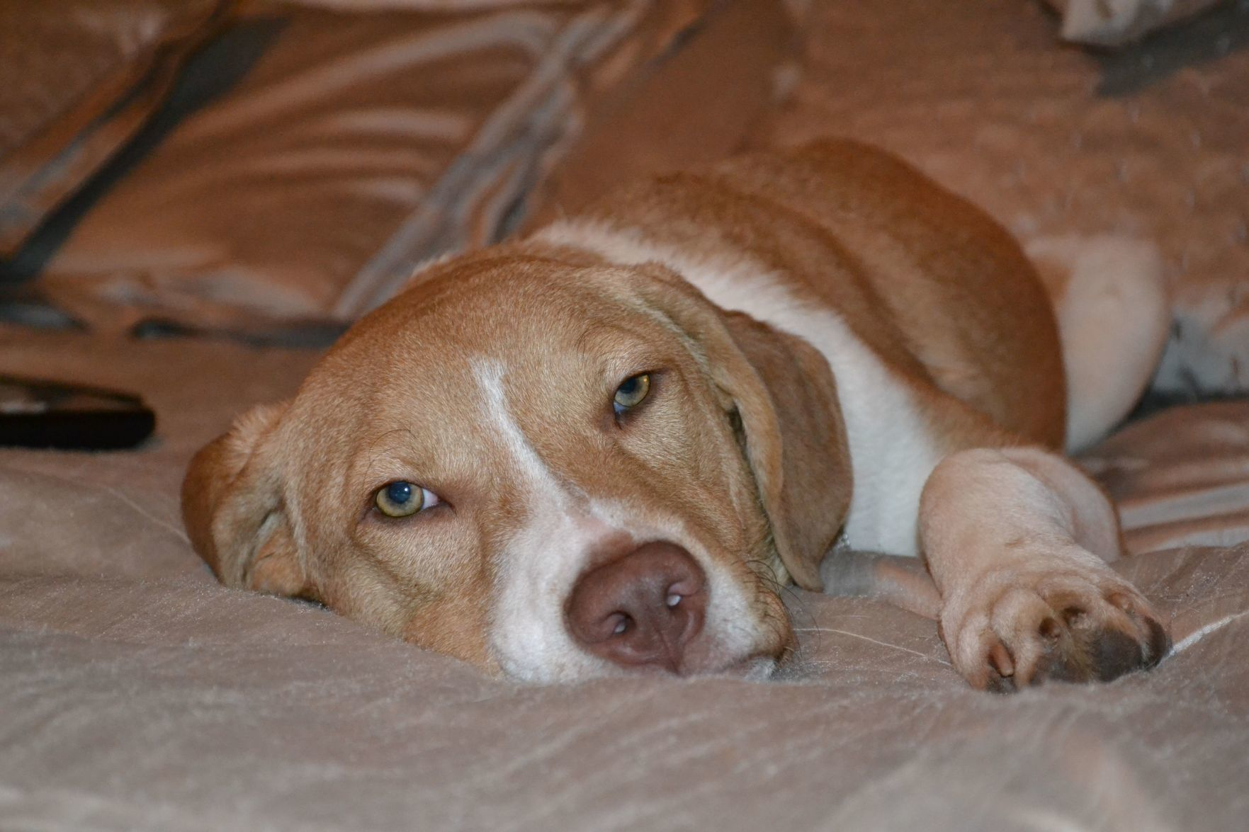 dog friendly hotels tucson