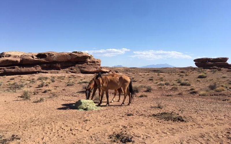 Parched horses