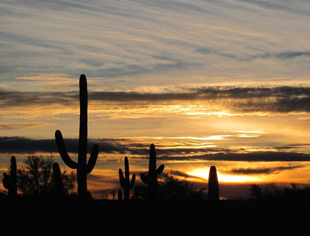 Saguaro Park sunset
