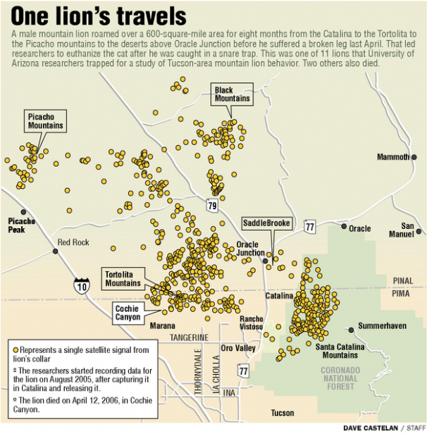 How close do mountain lions come to you? | Local news ... on detailed map of tucson arizona, aerial map of arizona, google map of tucson arizona, google satellite map arizona, satellite view of arizona, aerial view of tucson arizona, corona de tucson map of arizona, satellite view of united states, landform map of phoenix arizona, satellite map tucson az, city map of tucson arizona, map of tucson within arizona, satellite map of phoenix az, names of cities in arizona,