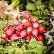 Heirloom Farmers Markets