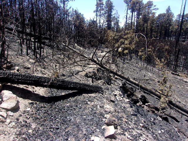 Bighorn Fire burn scar, trails