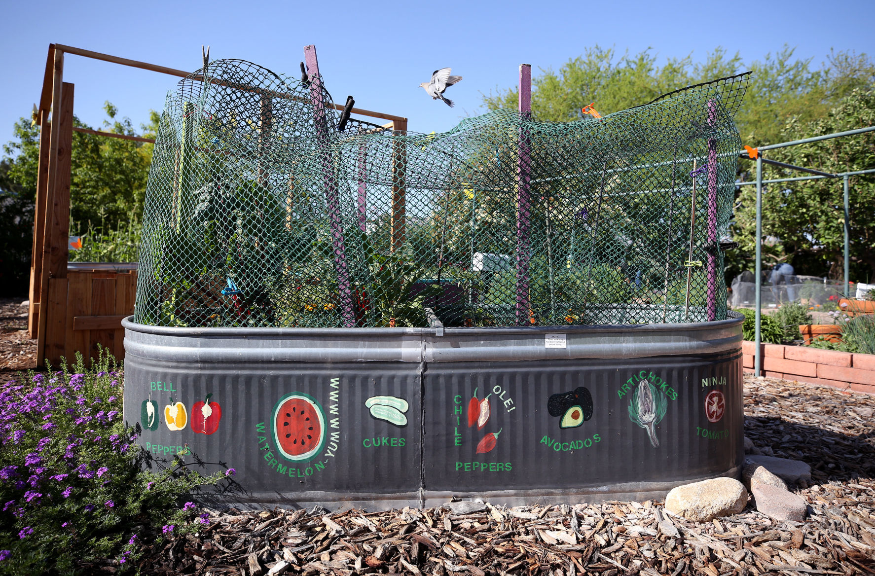 Garden Tours U2014 Pima County Cooperative Extension