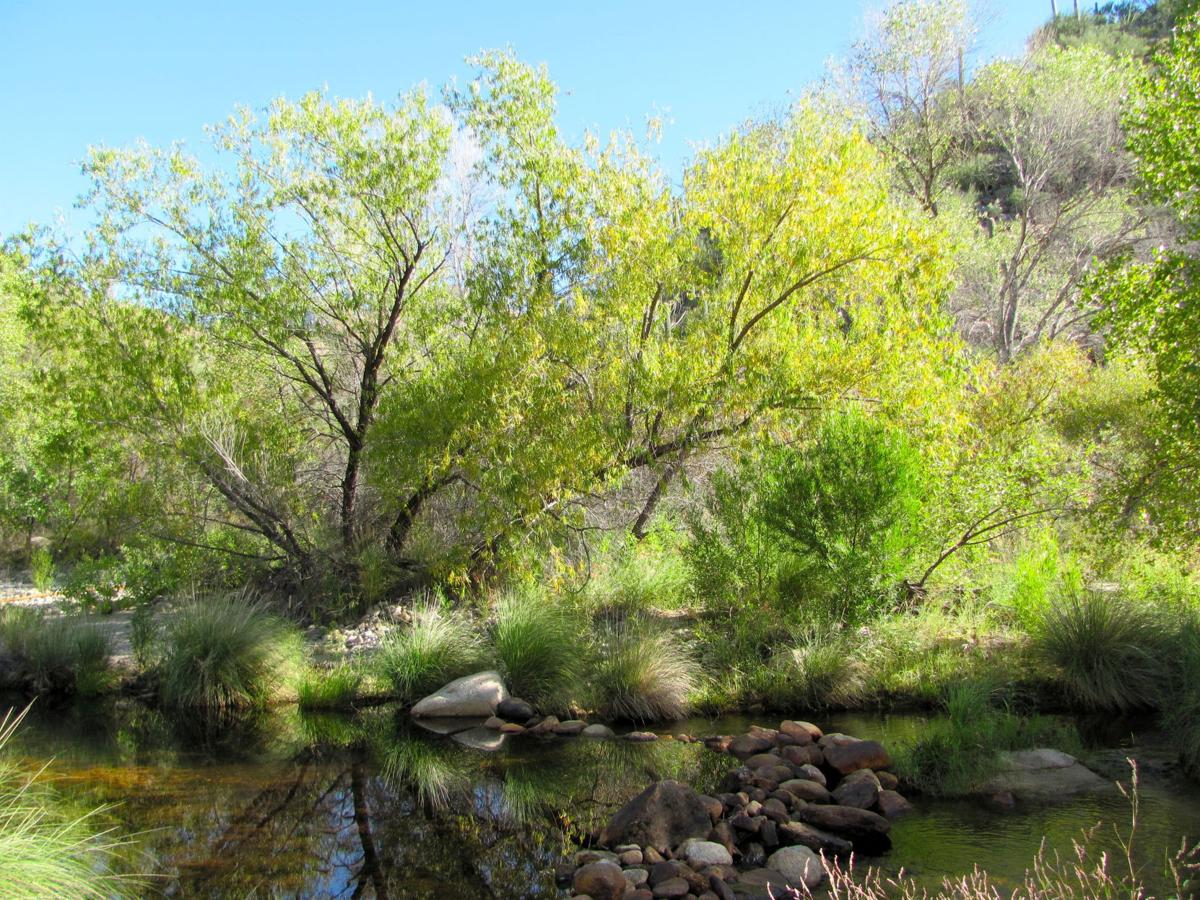 First flushes of fall color brighten Sabino Canyon | Local news ...