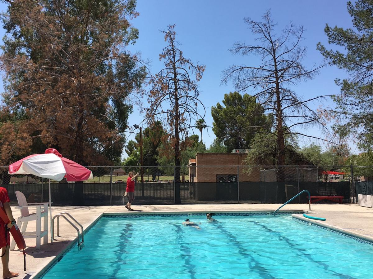 Dead Aleppo pines at YMCA pool