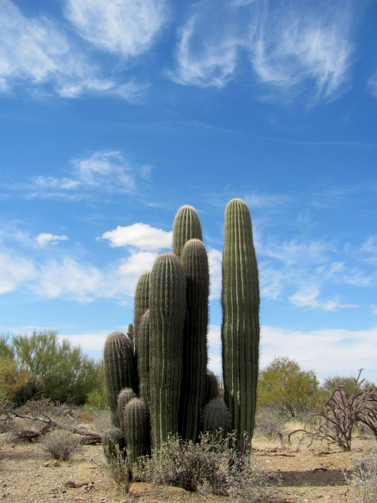 Clouds over cactus cluster