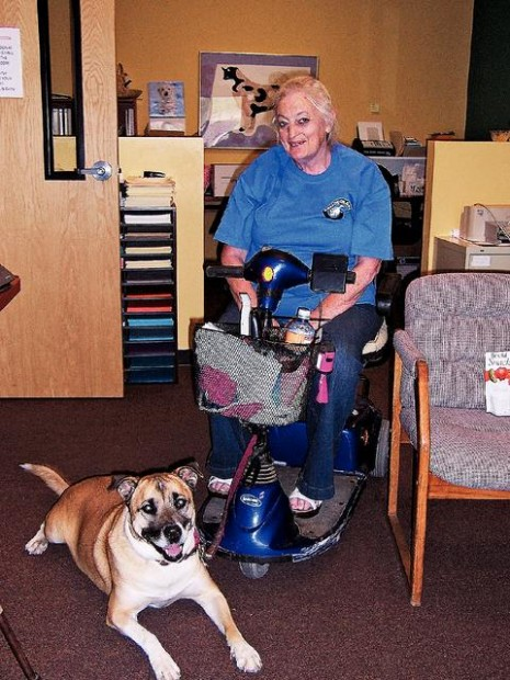 Service Dogs Tucson Az