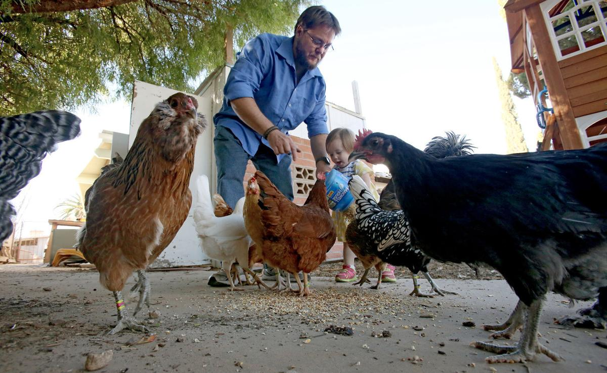 council approves rules for backyard chickens and gardens local