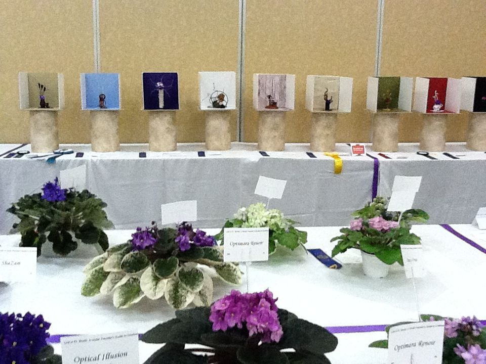 best az home and garden show. Tucson African Violet 60th Judged Show and Sale Gardening Home Feb  25 March 3 Garden tucson com