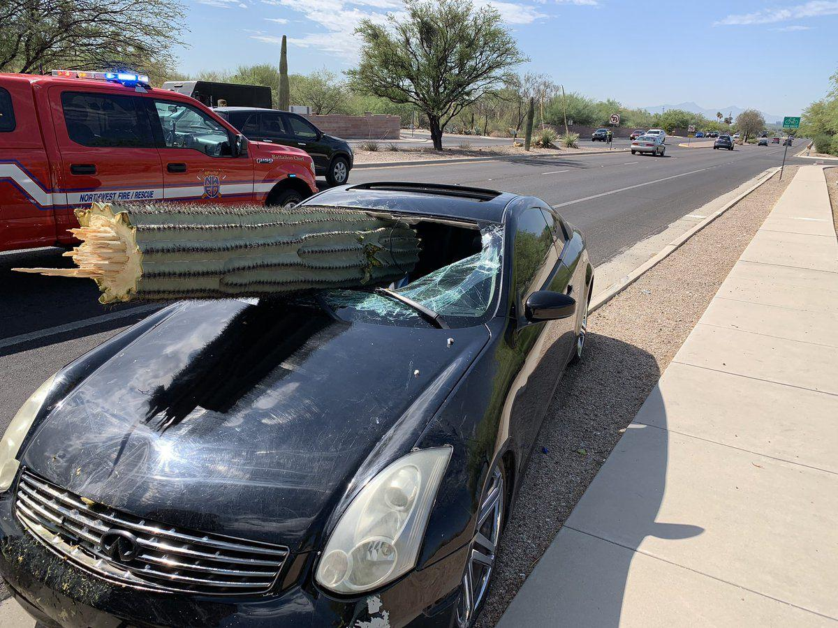 Saguaro slices through car windshield in Catalina Foothills crash