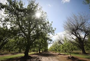 Saving groundwater: 3 new pipelines to bring CAP to Tucson's suburbs