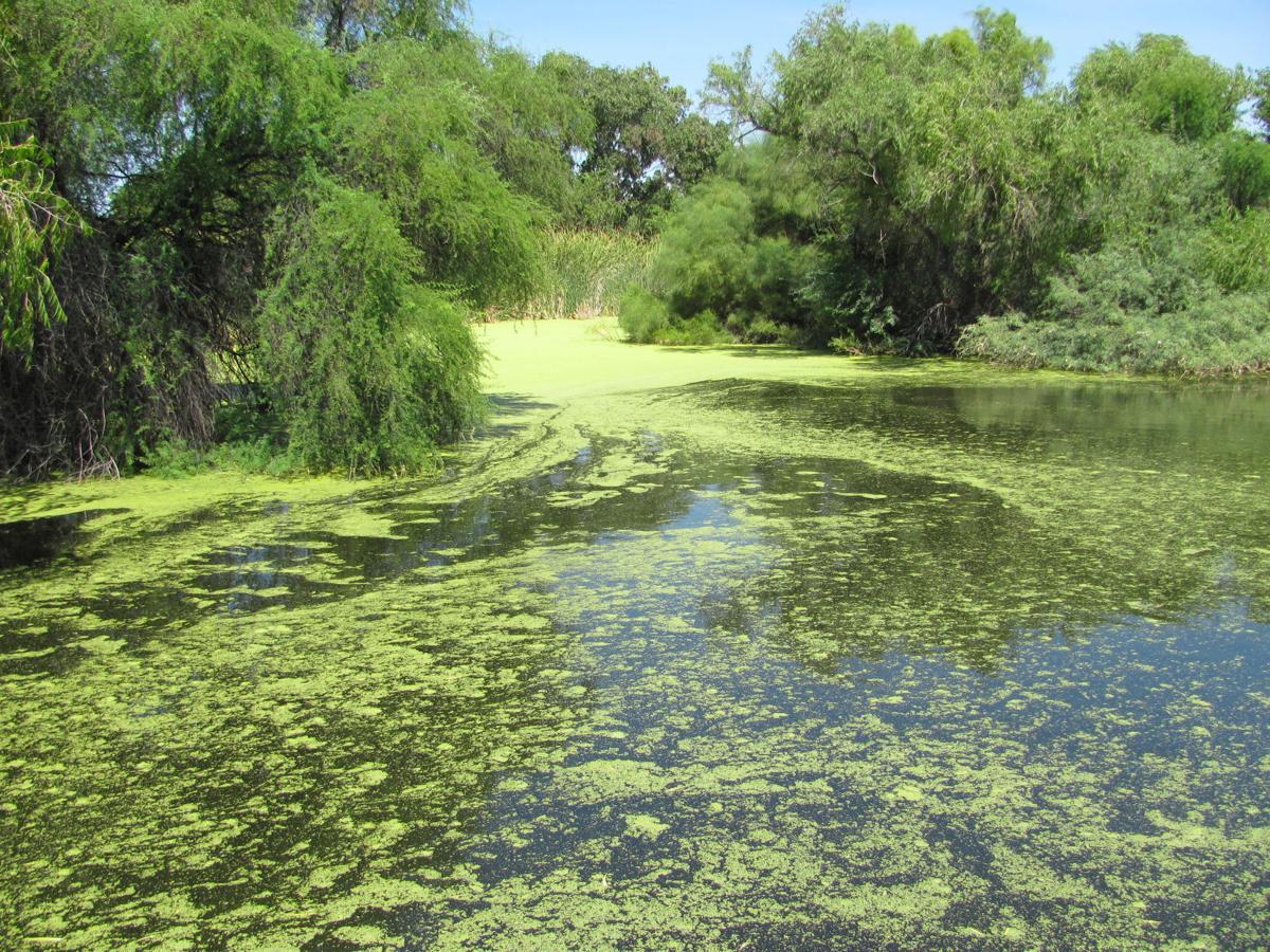 Sweetwater bayou