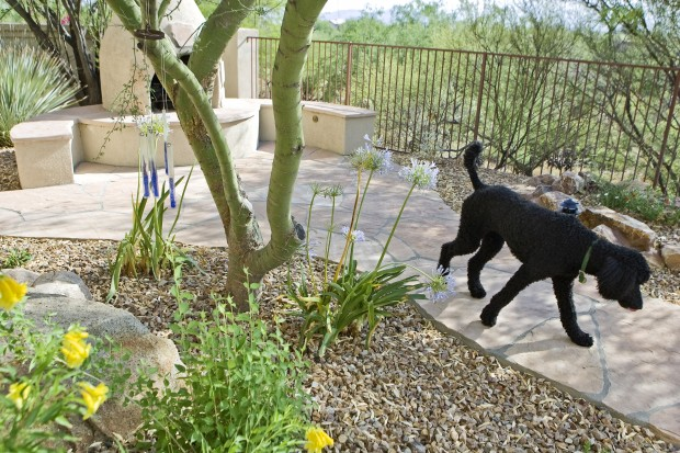 Backyard Pets some comfy romping room for pets | tucson gardens | tucson