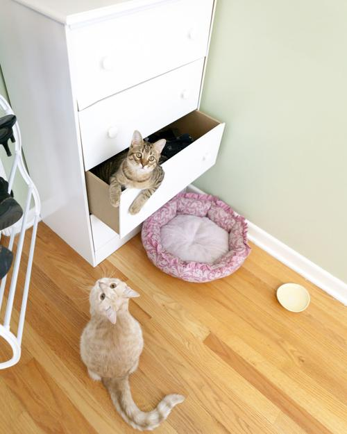 My Pet World: Changes in the home can mean changes in