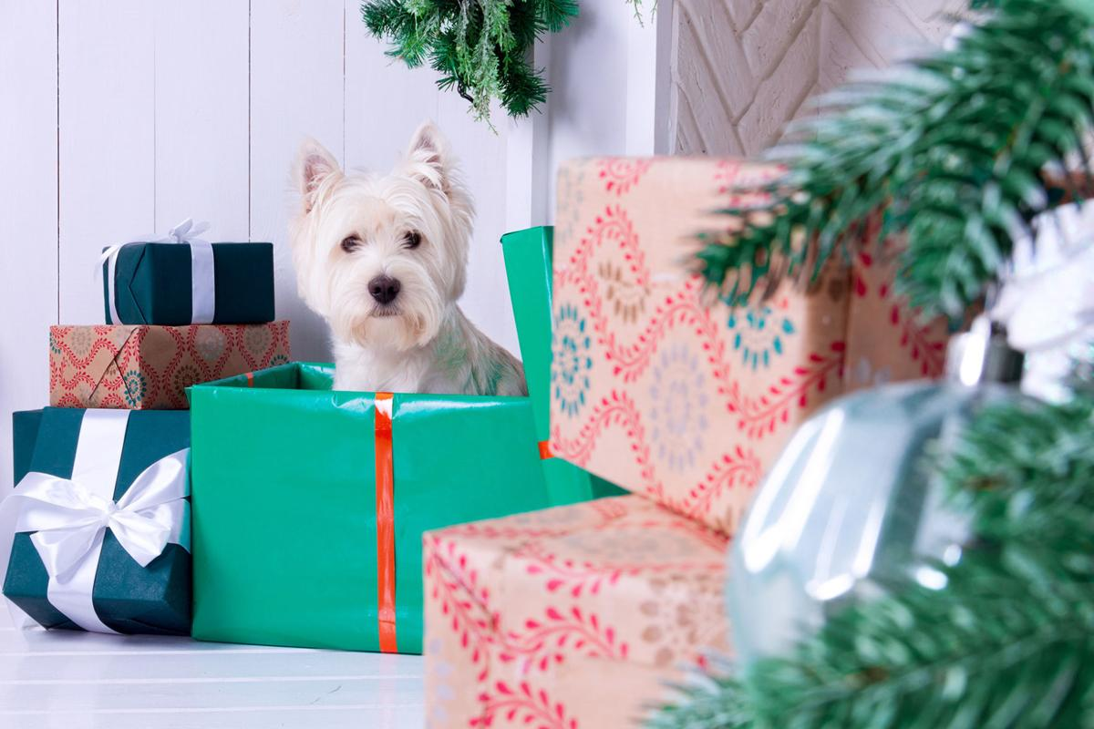 My Pet World: Are pets as gifts a good idea for the holidays ...