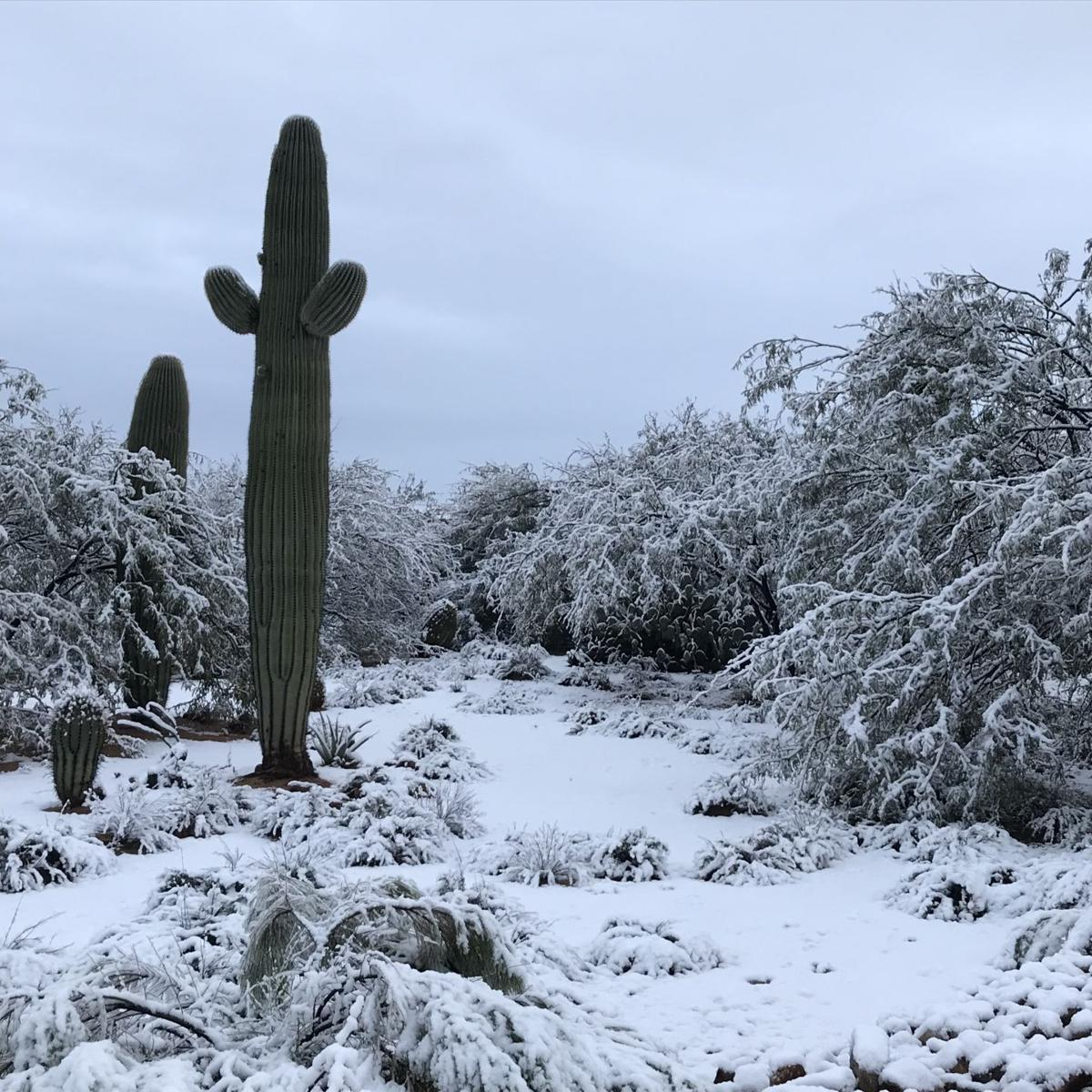 Sahuarita Snow
