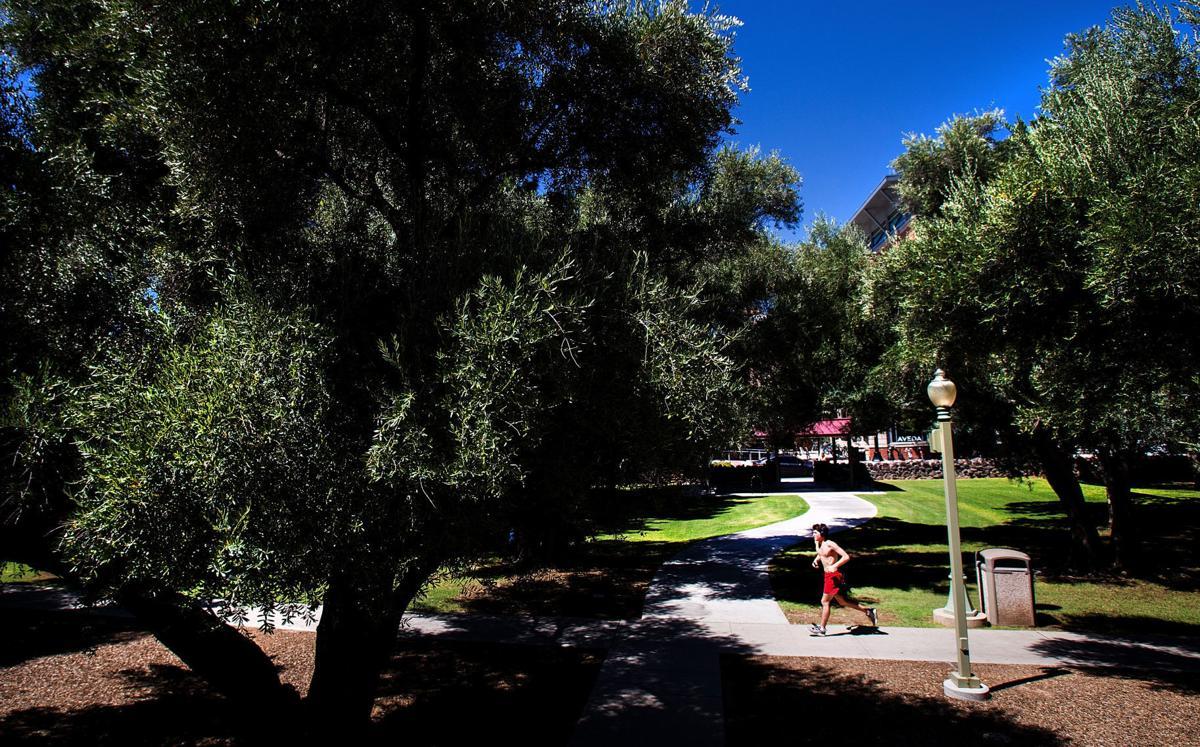 Olive Walk