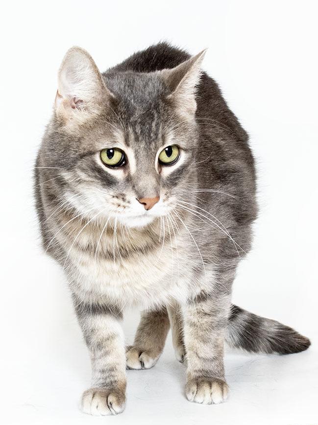 Adoptable pets in Tucson | Entertainment | tucson com