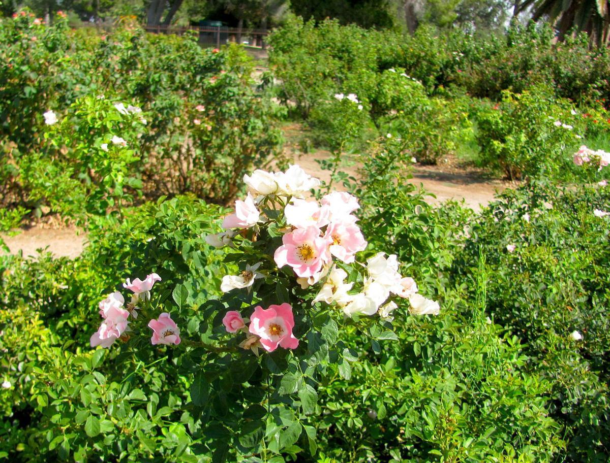 Variety of blooms