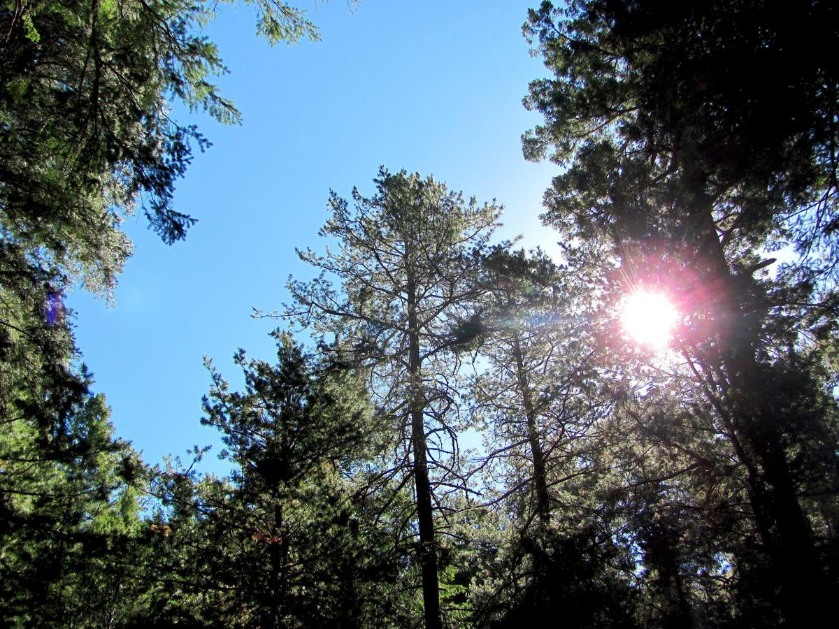 Sunlight in the forest canopy