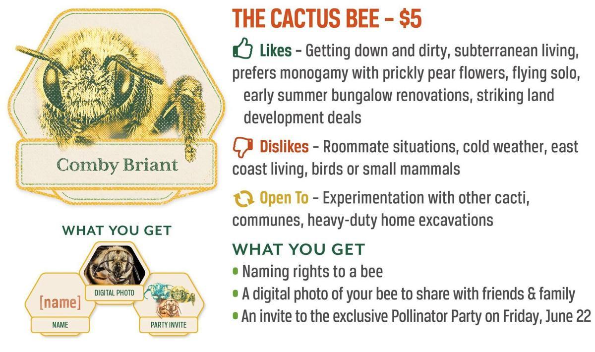 The Cactus Bee