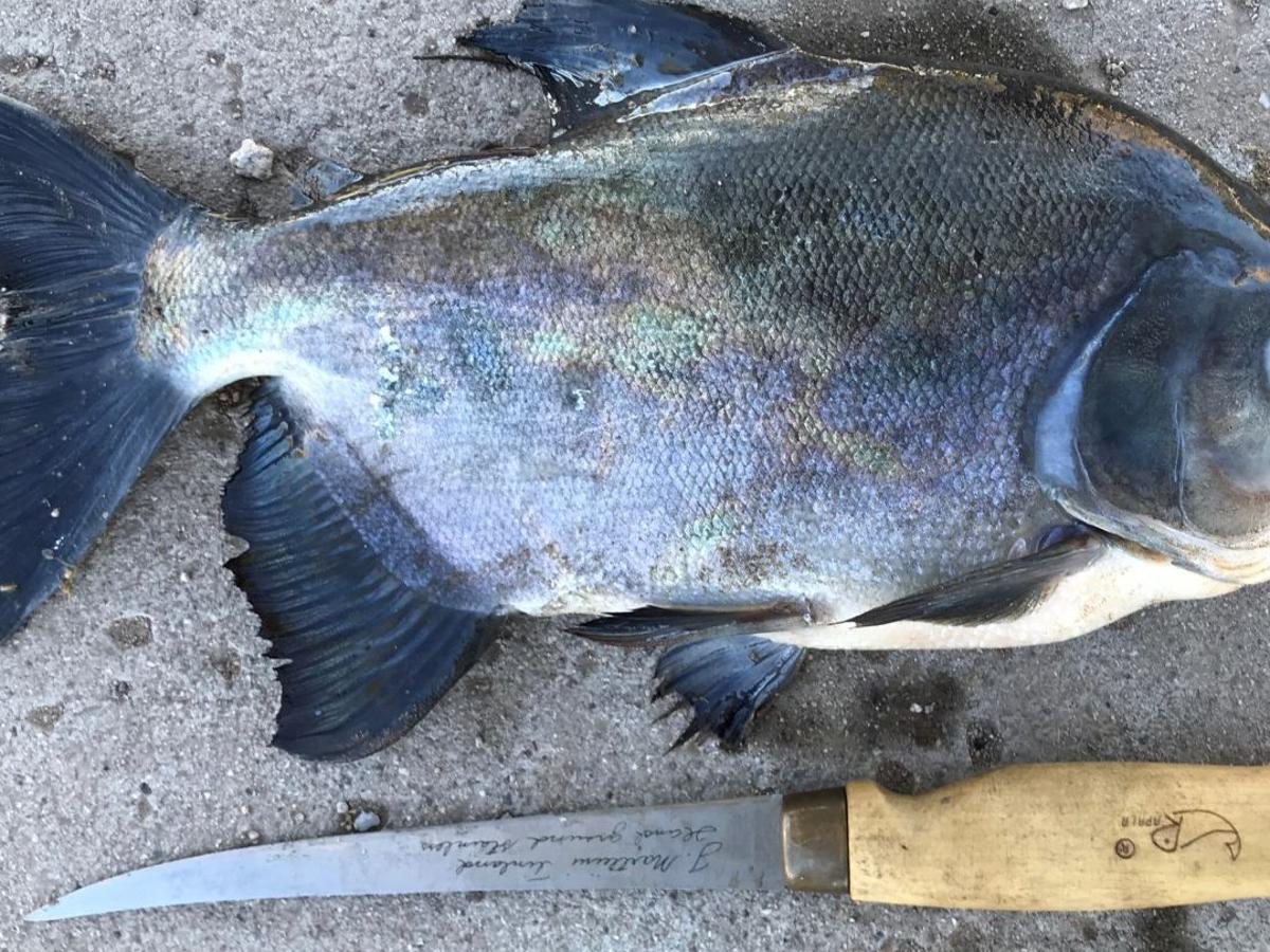 A Tucson Fisherman Hoping To Catch Trout At Silverbell Lake Hooked This Instead Local News Tucson Com