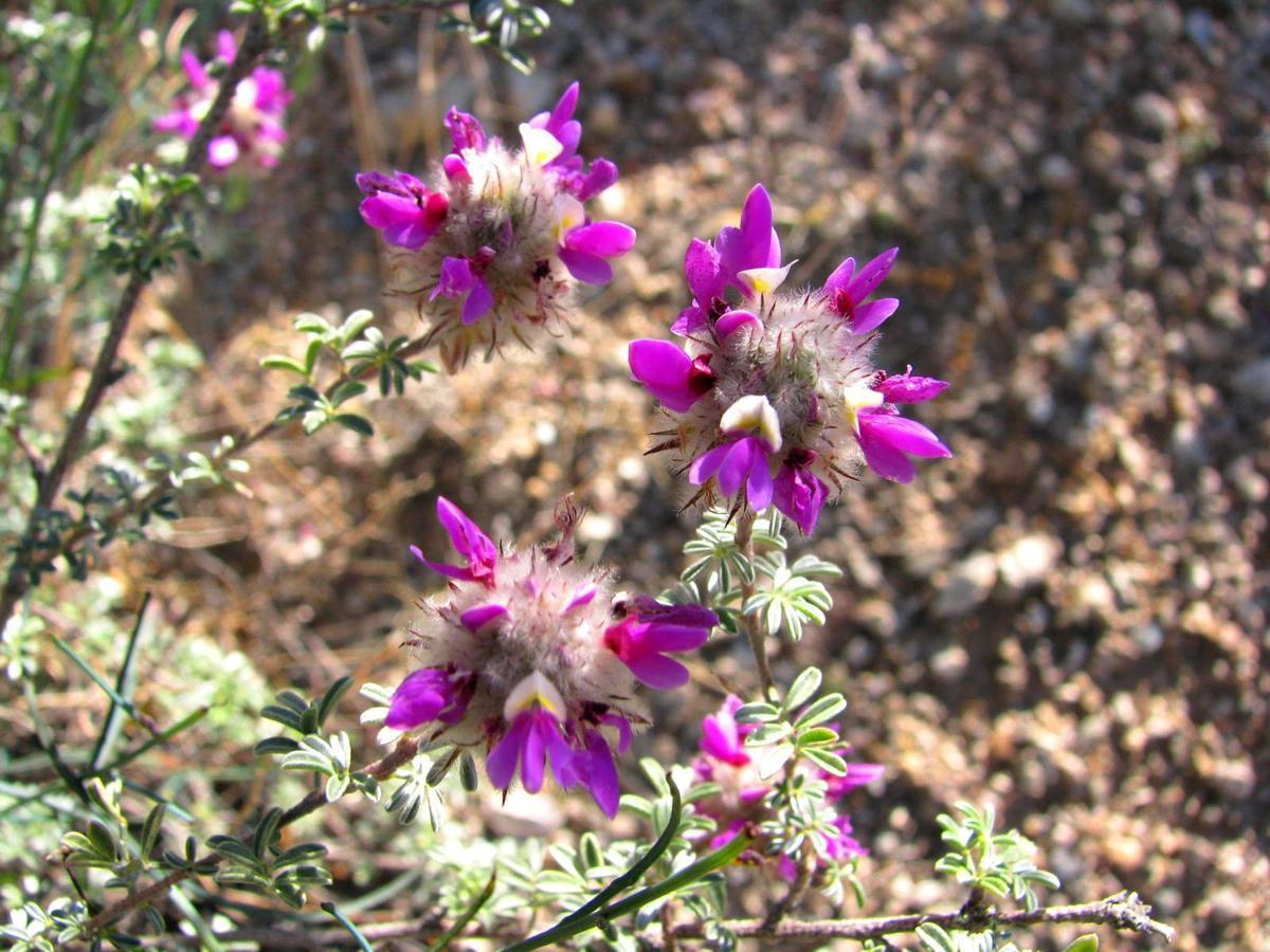 Desert Botany 101: Saguaro National Park East.