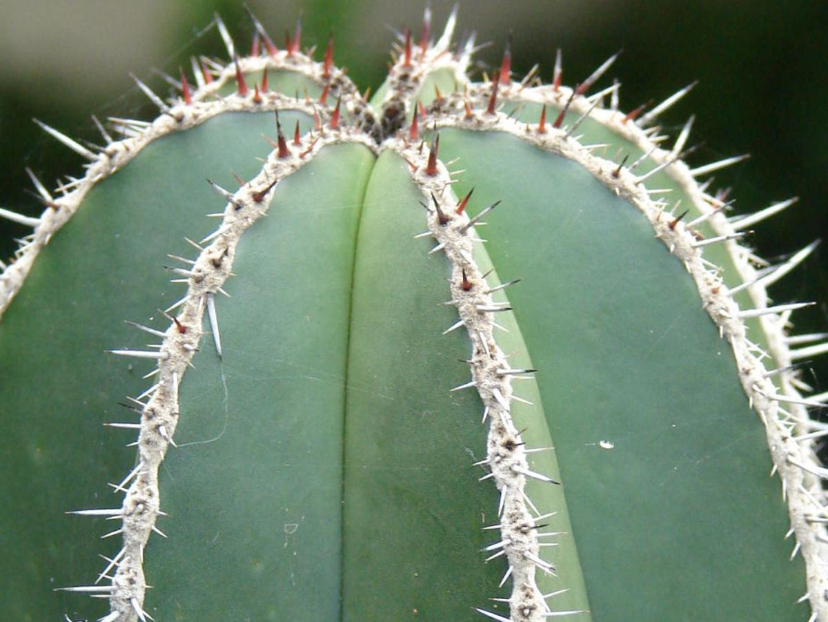 Cactus Develop A Sun Tolerance On One Side Tucson Com