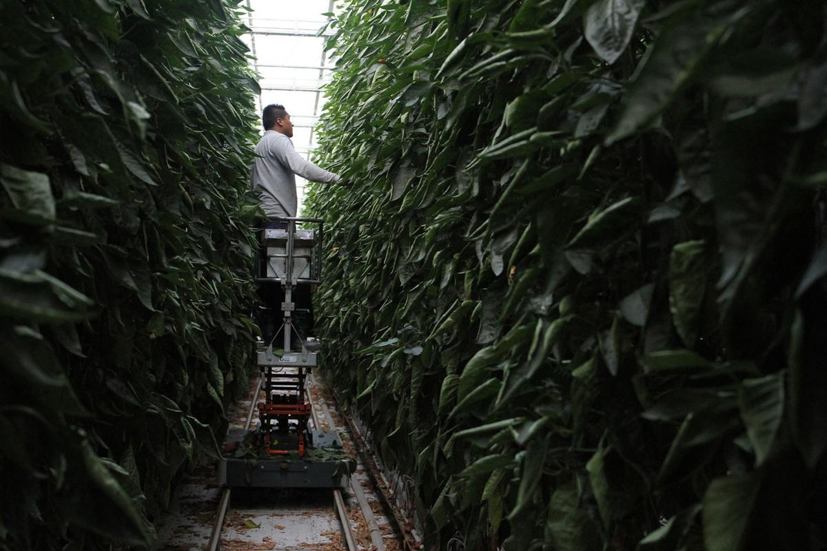 Mexico looks to high-tech 'agroparks' to drive agricultural future