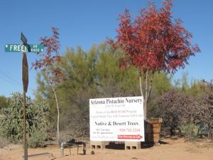 Arizona Pistachio Nursery
