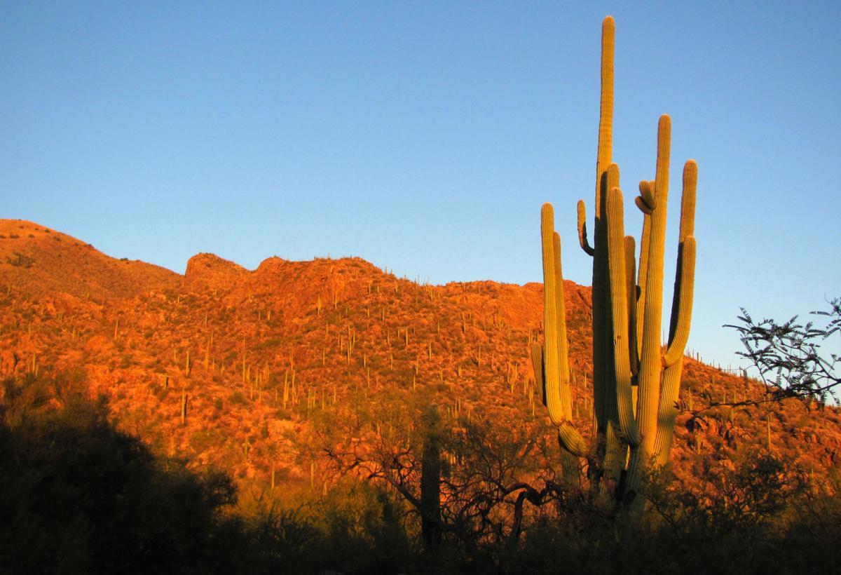 Top trails: Ventana Canyon Trail (LE)