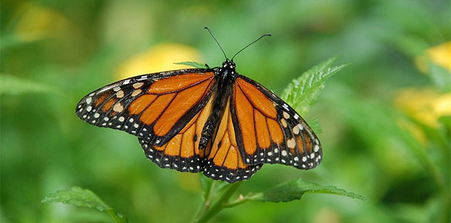 Build a Butterfly Feeder
