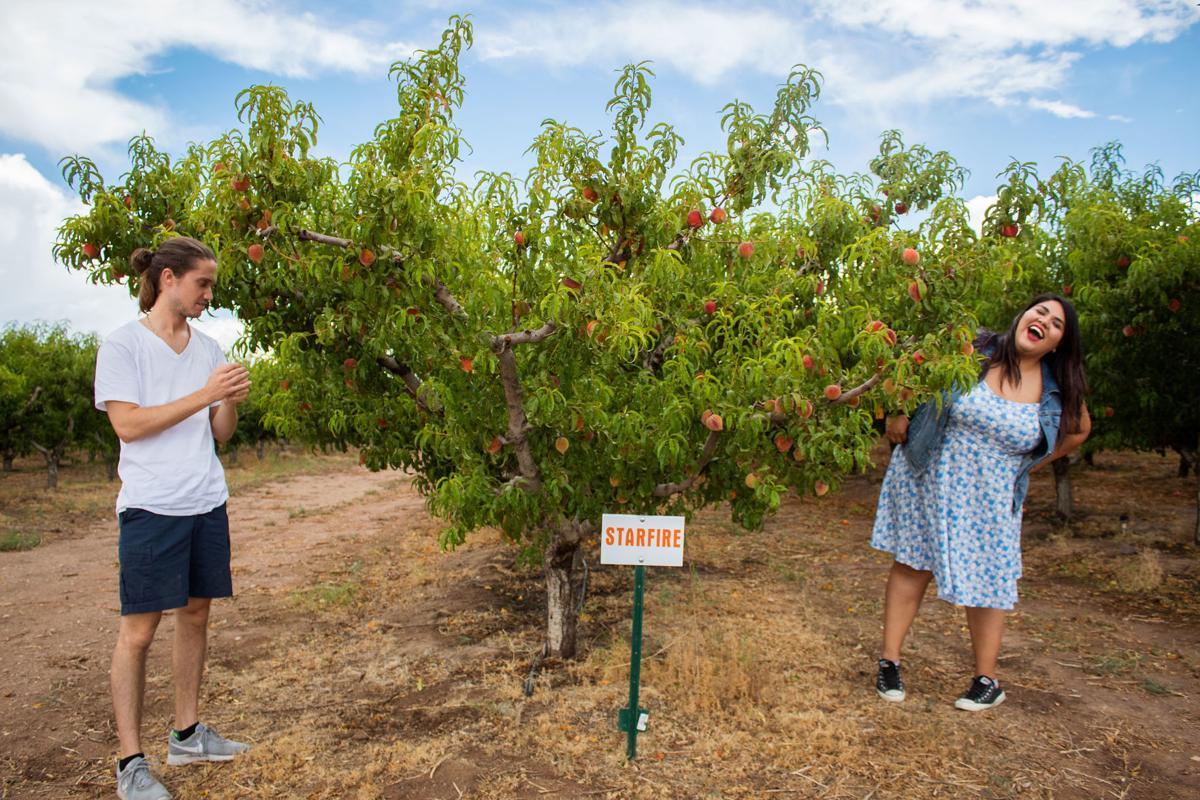 Peach picking at Apple Annie's
