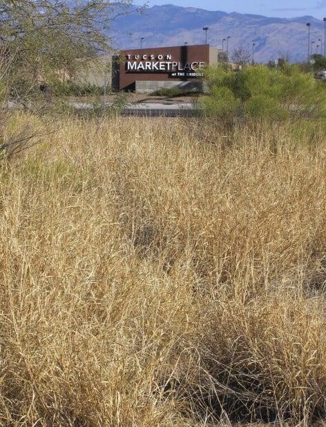 Buffelgrass poses urban fire risk