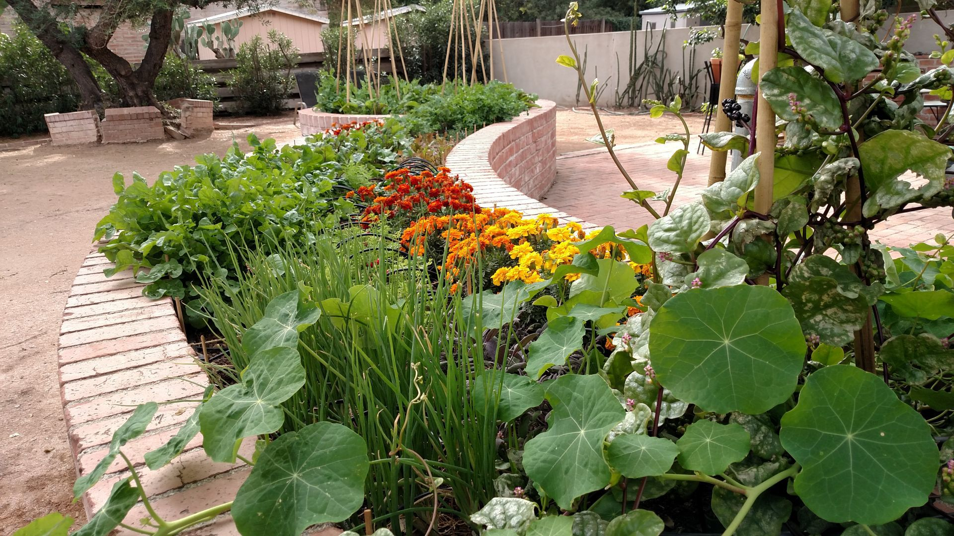 Putting Color Into Your Winter Garden, And Onto Your Plate