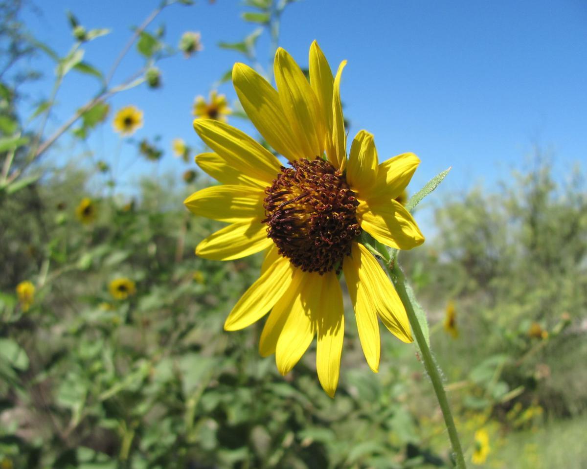 Blooms at Agua Caliente Park