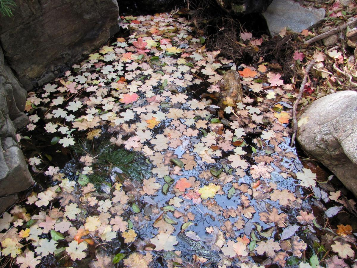 Leaves in a mountain pool