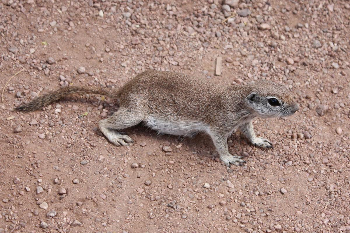 You can contain ground squirrels