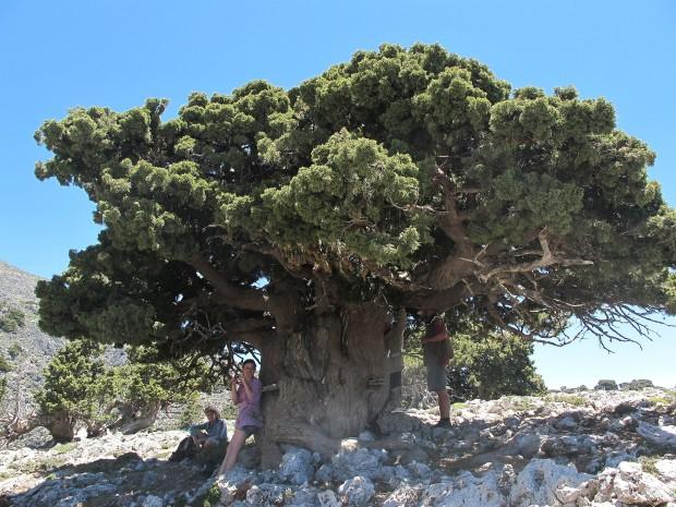 Climate, Mediterranean cultures, change