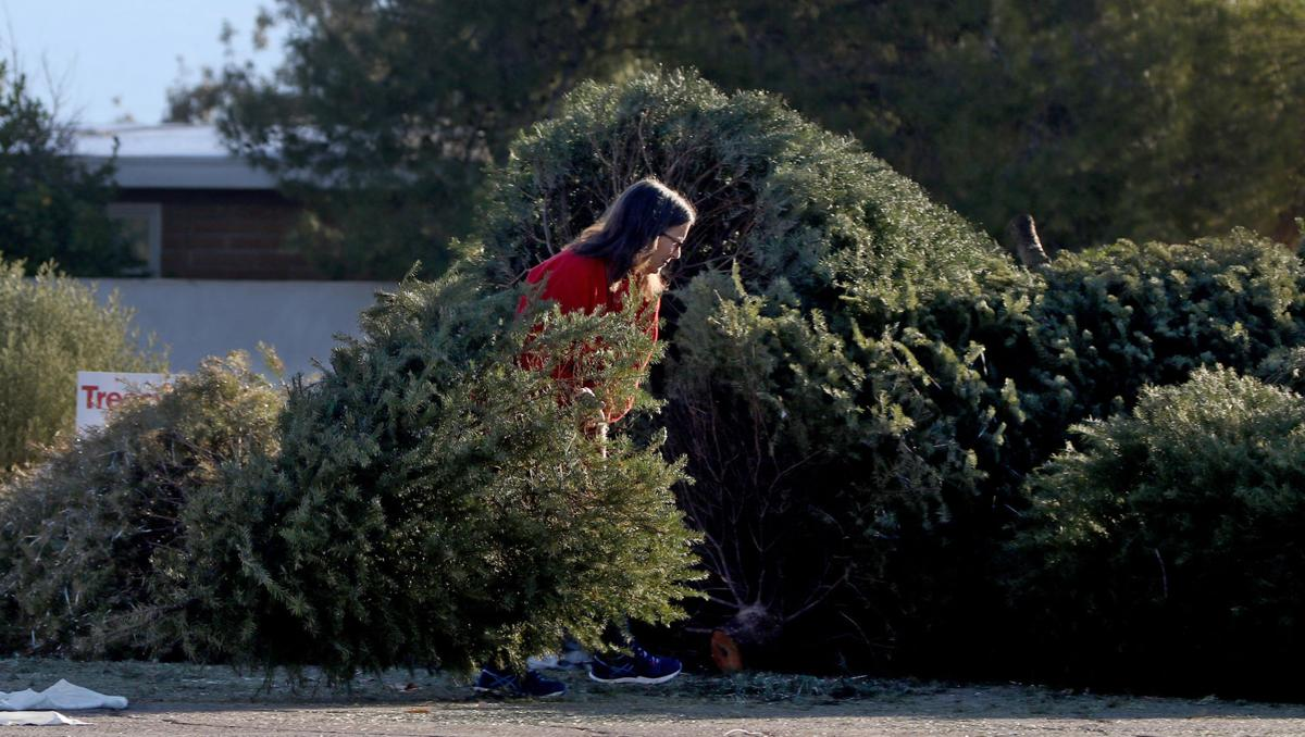 Christmas In Tucson 2020 Christmas Tree Recycling Tucson 2020 | Rfpmmr.econewyear.site