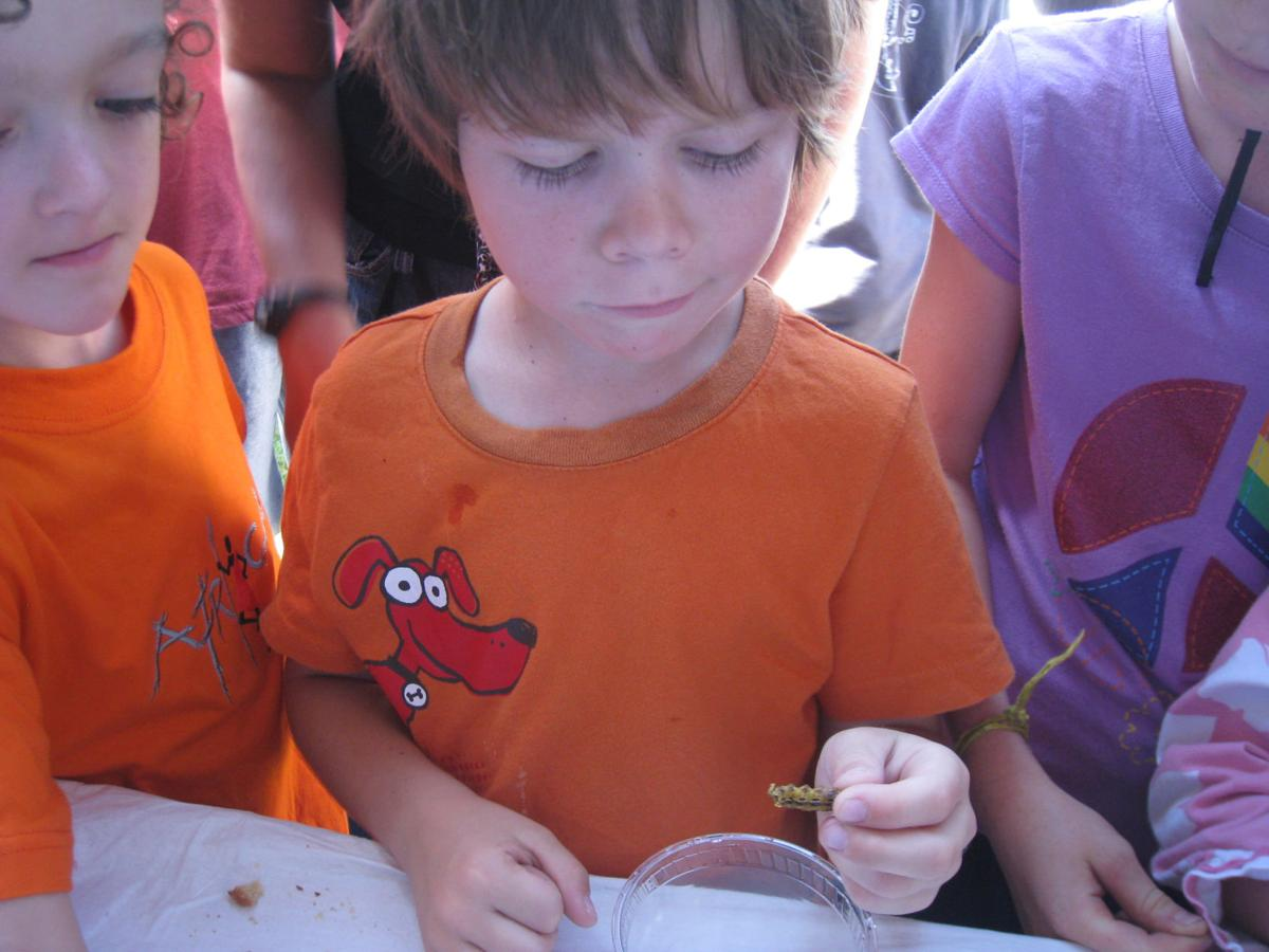 Kids at insect festival